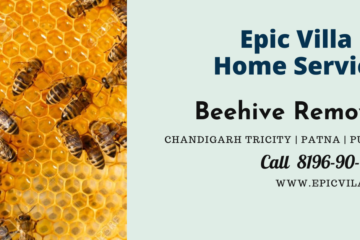 beehive removal steps